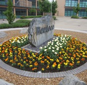 Flower bed for commercial premises open space installed and maintained by Marcus Young Landscapes Ltd