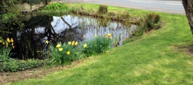 Village Pond to illustrate Town and Parish Council landscape and ground maintenance